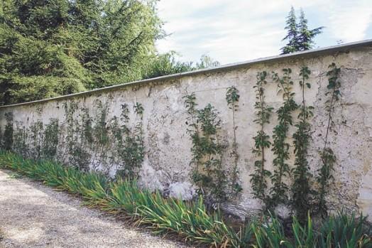 Acheter montreuil 93 - Petit jardin de luxe montreuil ...